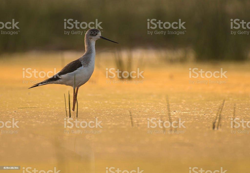 Beauty of nature stock photo