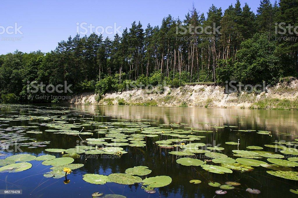 Beauty of nature royalty-free stock photo