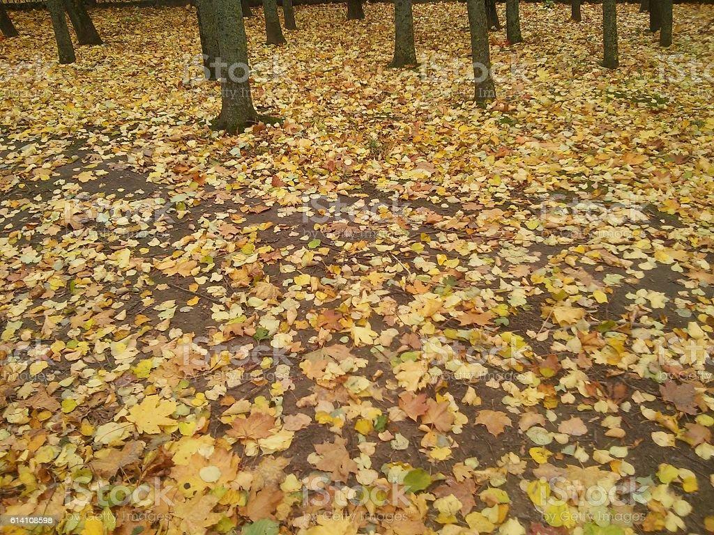 Beauty of seasons stock photo