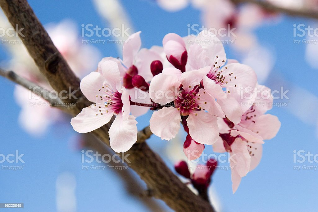 Beauty of spring royalty-free stock photo