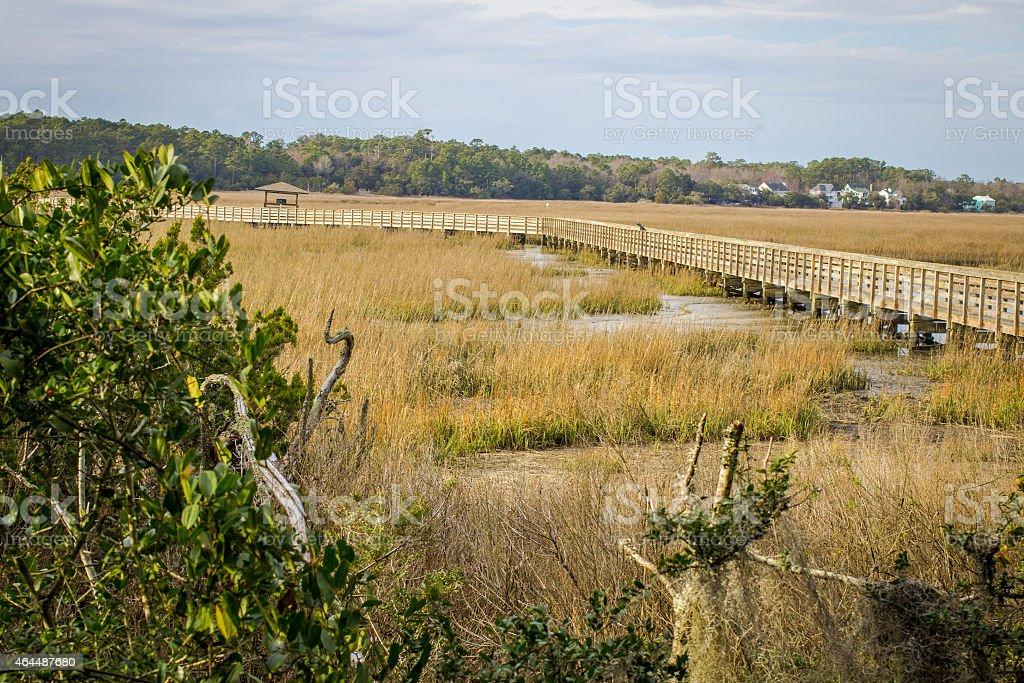 Beauty Of The Carolina Low Country stock photo