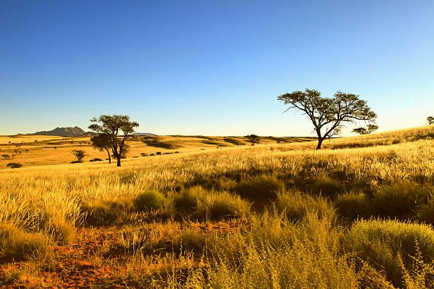 schönheit der wüste namib naukluft national park, namibia, afrika. - afrikanische steppe dürre stock-fotos und bilder