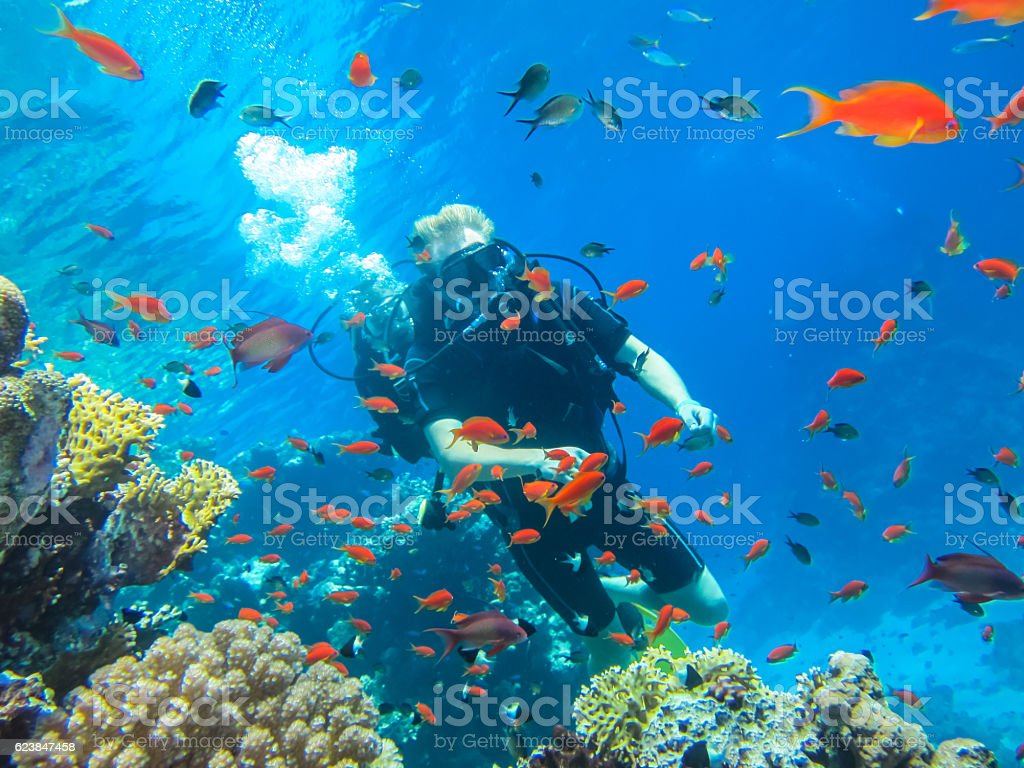 Beauty of the wild nature of the sea. Diving in the Red Sea stock photo
