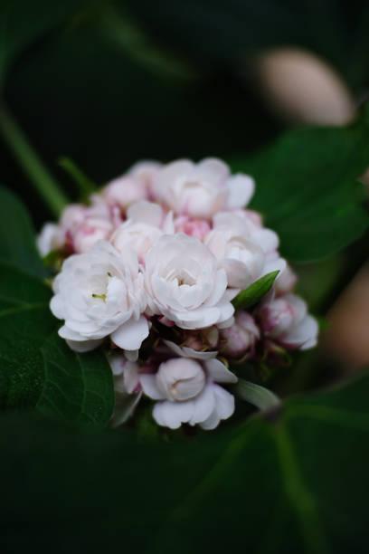 Beleza da flor branca - foto de acervo
