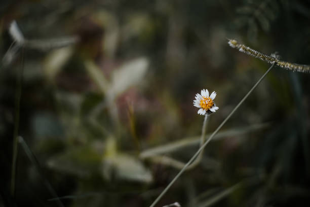 Beleza da flor amarela - foto de acervo