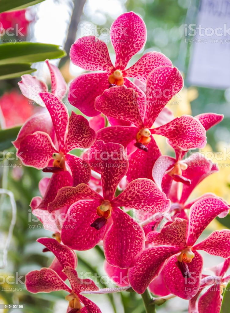 Beauty orchid. stock photo