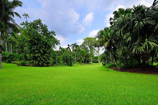 schönheit ruhigen garten - palmengarten stock-fotos und bilder