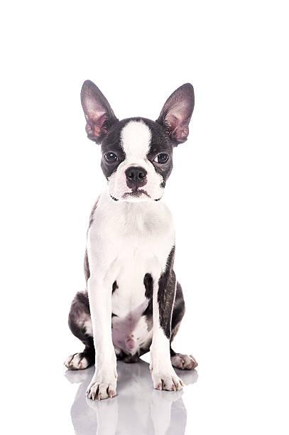 Beauty puppy shot picture id186666976?b=1&k=6&m=186666976&s=612x612&w=0&h=axvmnmf fsln29e8 zvno nxh9dsxlaq1t4gyyzhpmu=