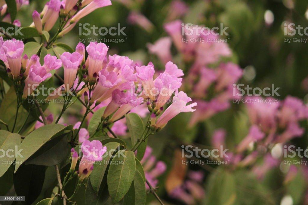 beauty purple flower stock photo