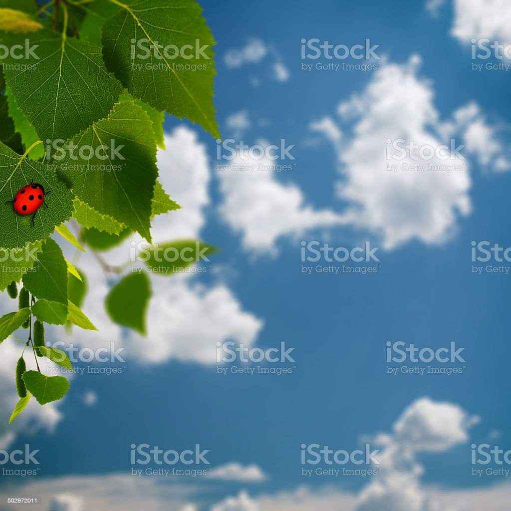 beauty summer backgrounds with green foliage and red  ladybug stock photo