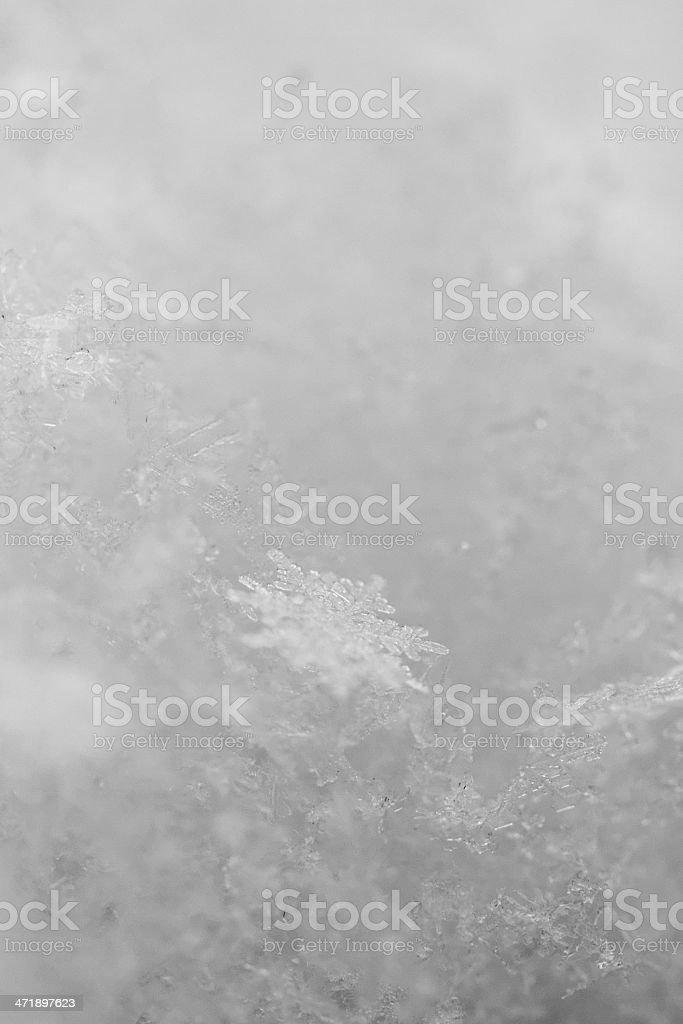 beauty white snowflake crystals royalty-free stock photo