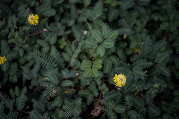Flor amarela de beleza - foto de acervo