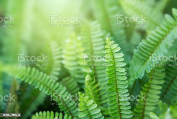 Photo of Beautyful ferns leaves green foliage natural floral fern background in sunlight.