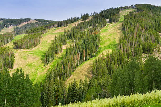 Beaver Creek Colorado Ski Runs in Summer Beaver Creek Colorado Ski Runs in Summer.  Scenic view of mountain in summer on sunny day.  Captured as a 14-bit Raw file. Edited in ProPhoto RGB color space. beaver creek colorado stock pictures, royalty-free photos & images
