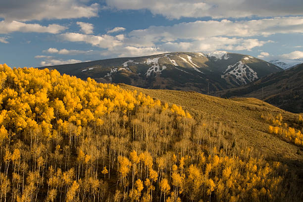 Beaver Creeks First Snow Alpine Glow over Beaver Creeks first snow and fall colors. beaver creek colorado stock pictures, royalty-free photos & images