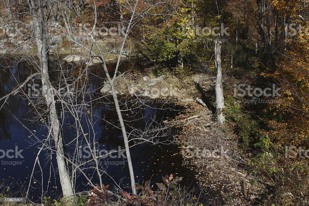 Beaver Dam and Pond in Fall royalty-free stock photo