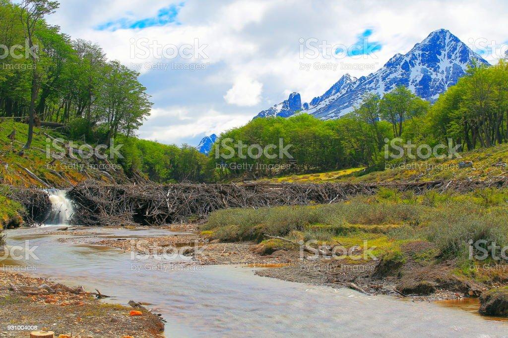 Beaver dam - verschwommene Fluss und Landschaft Ushuaia, Feuerland, Argentinien – Foto