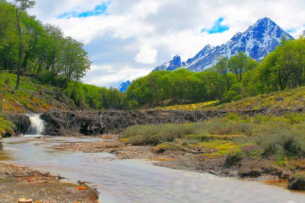 Barrage de castors - rivière floue et Ushuaia paysage - Tierra Del fuego (Argentine) - Photo