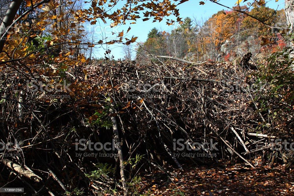 Beaver Dam close- up royalty-free stock photo