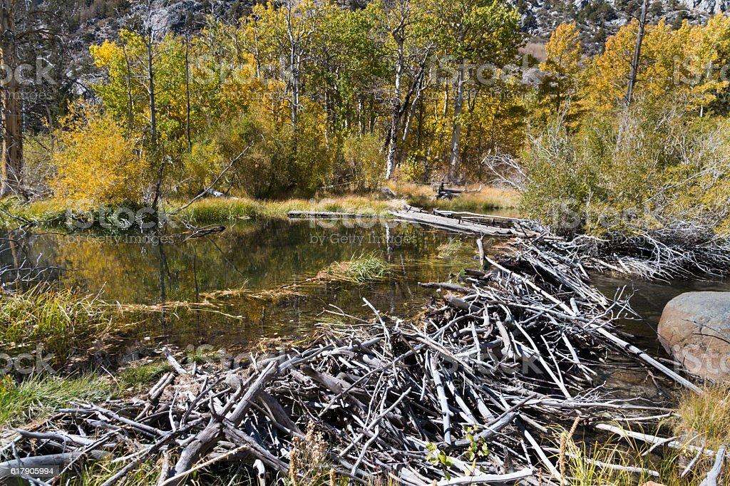 Beaver Dam in Rock Creek Canyon stock photo