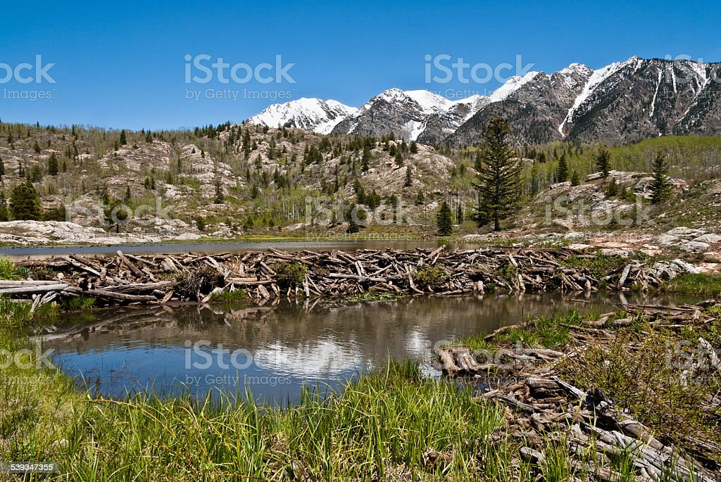 Beaver Dam in the San Juan Mountains stock photo