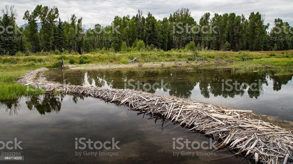 Beaver Dam in the Tetons stock photo