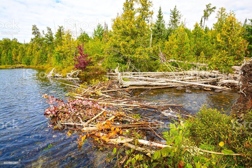 Beaver Dam in the Wilderness stock photo
