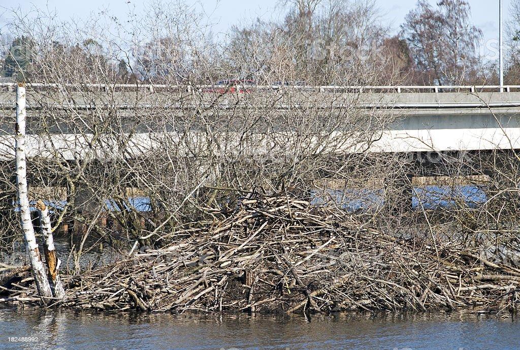Beaver dam near freeway royalty-free stock photo