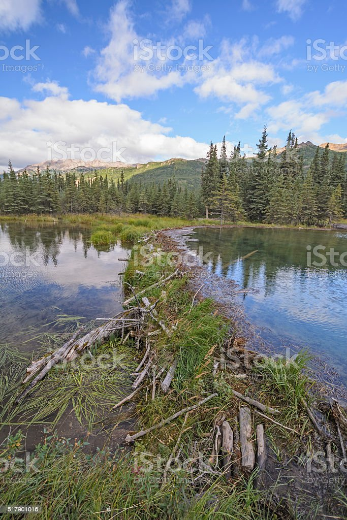 Beaver Dam on a Wilderness Lake stock photo