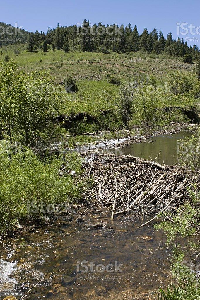 Beaver Dam on Bear Creek, Colorado royalty-free stock photo