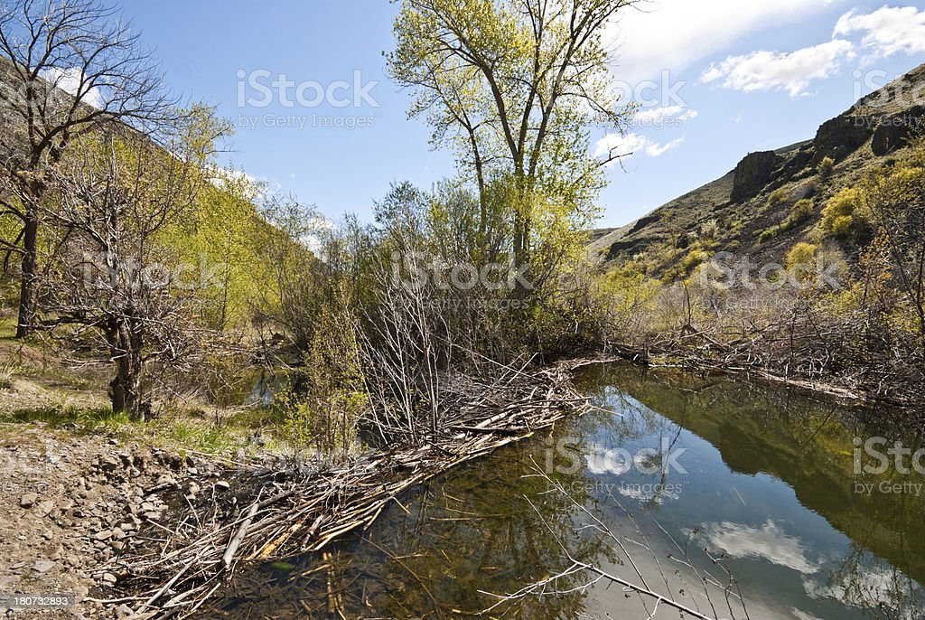 Beaver Dam on Umtanum Creek royalty-free stock photo