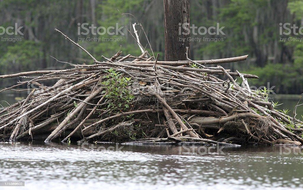 Beaver Dam – Foto