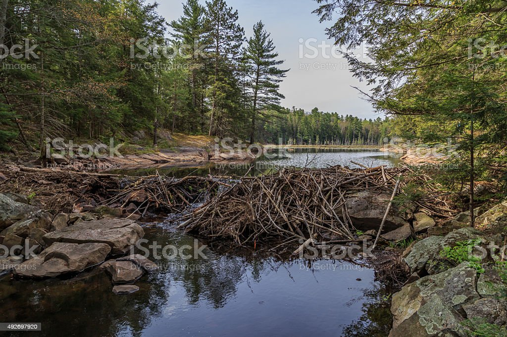 Beaver dam Taken from the low side of a beaver dam this ontario travel photo shows the reason to get out in the woods 2015 Stock Photo