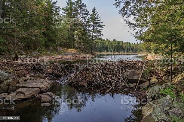 Beaver Dam Stock Photo - Download Image Now