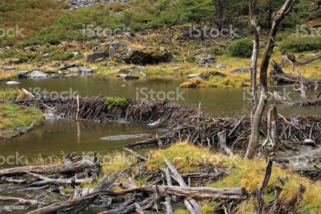 Beaver dam, Tierra Del Fuego, Chile stock photo