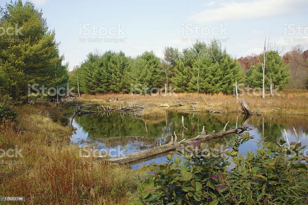 Beaver Damn in Pennsylvania royalty-free stock photo