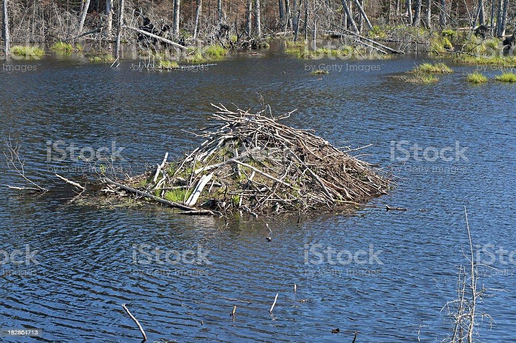 Beaver Hut stock photo