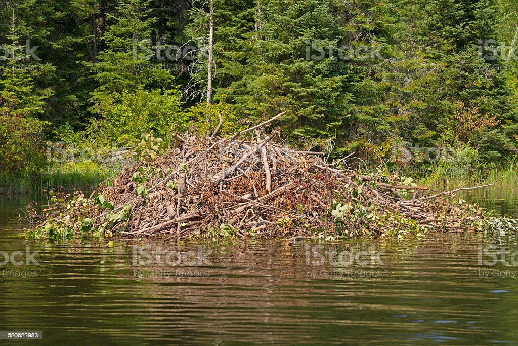 Beaver Lodge on a Wilderness River stock photo