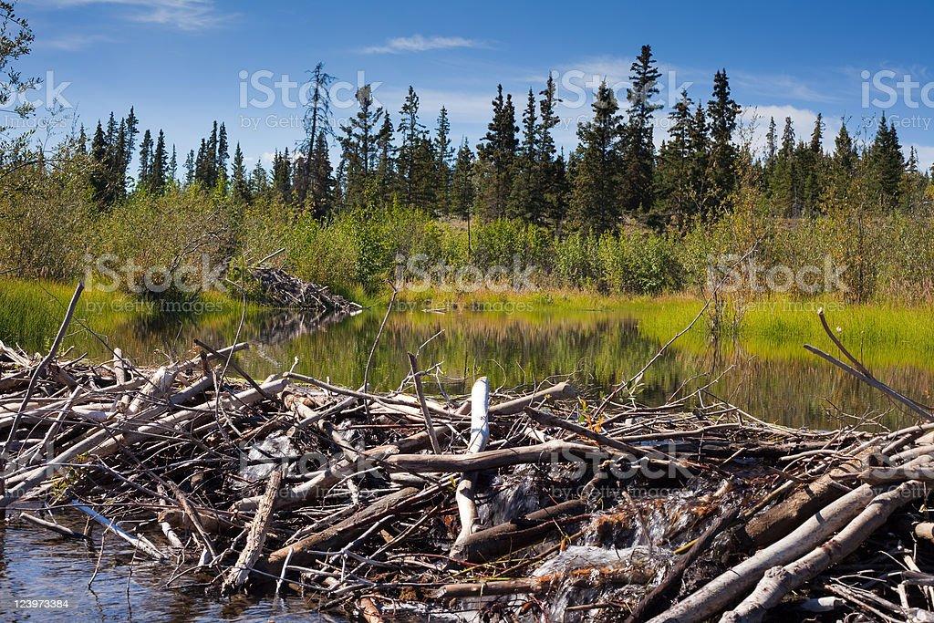 Beaver's Dam and Lodge stock photo