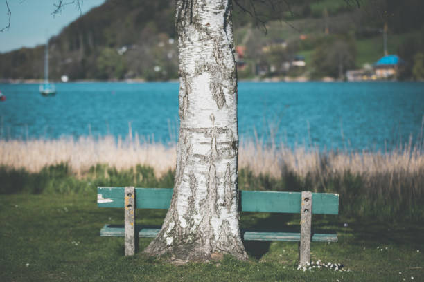 Bech in front of a tree on a lake stock photo