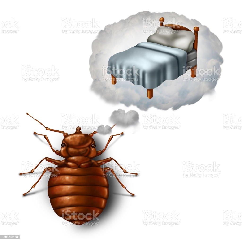 Bed Bug Dreaming stock photo