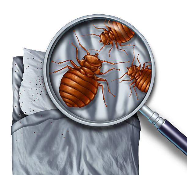 Bug Schädlingsbefall Bett – Foto