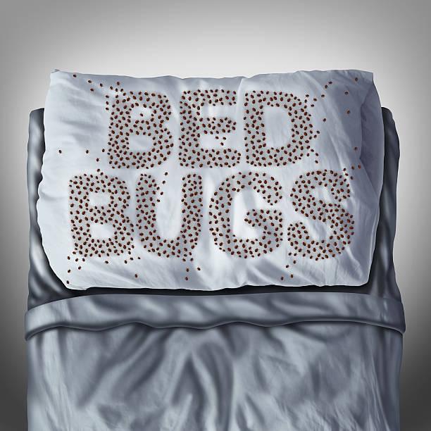 Bettwanzen auf Kissen – Foto