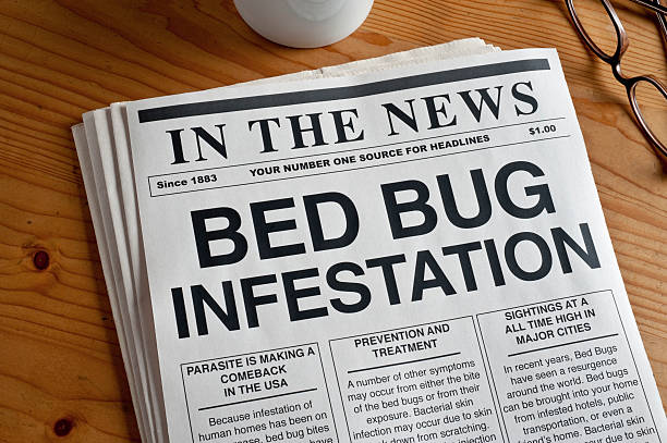 Bed Bugs stock photo