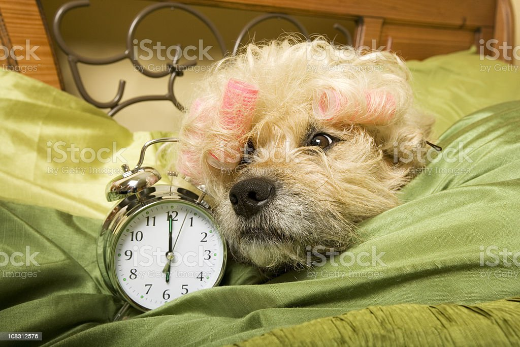 bed head royalty-free stock photo
