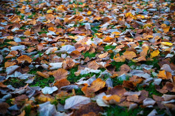 Bed of dead leaves in the forest stock photo