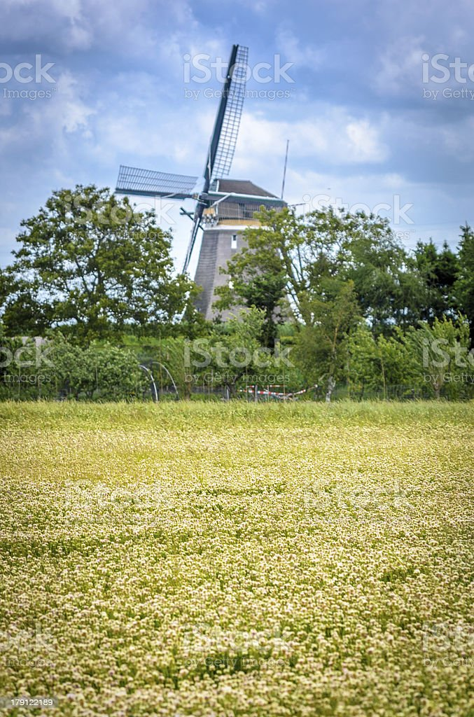 Bed of flowers and windmill royalty-free stock photo