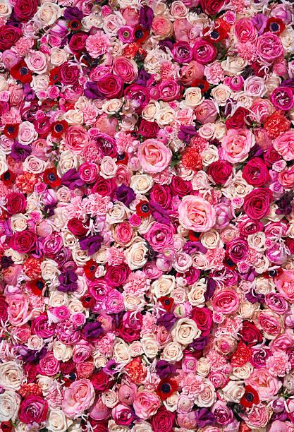 Bed of flowers picture id154926738?b=1&k=6&m=154926738&s=612x612&w=0&h=eu2r47mh0i8slk8gz et3fadwdrbpk04kdgcdo6tvoe=