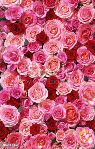 A backdrop of different roses