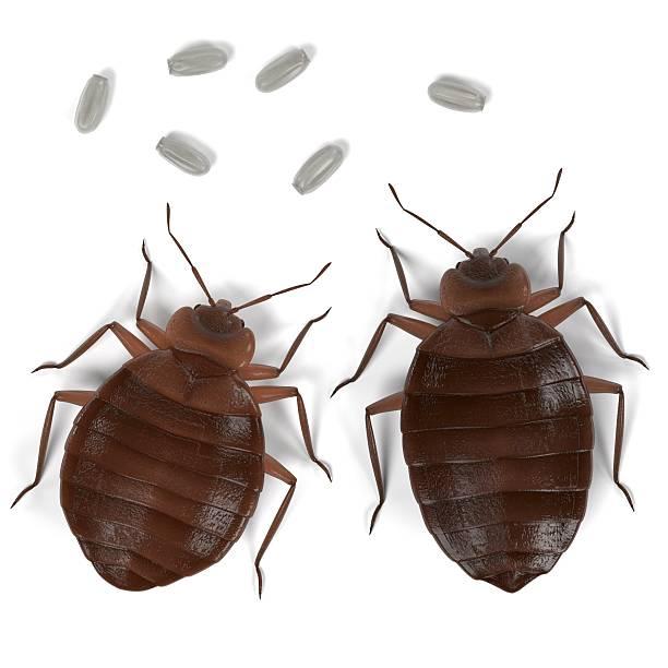 bedbug set – Foto